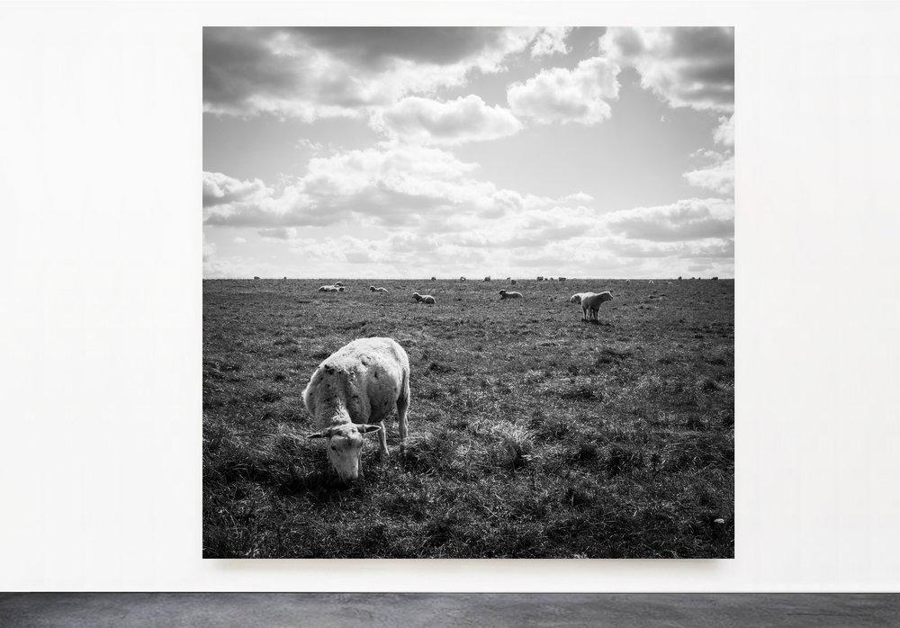 PANTUSO_PHOTOGRAPHY_SHEEP_STONEHENGE.jpg