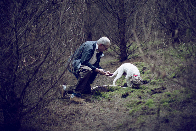 Tom, a Lagotto Romagnolo, hunting Oregon winter white truffles with his trainer, Jim Sanford. Credit: Laura D'Art