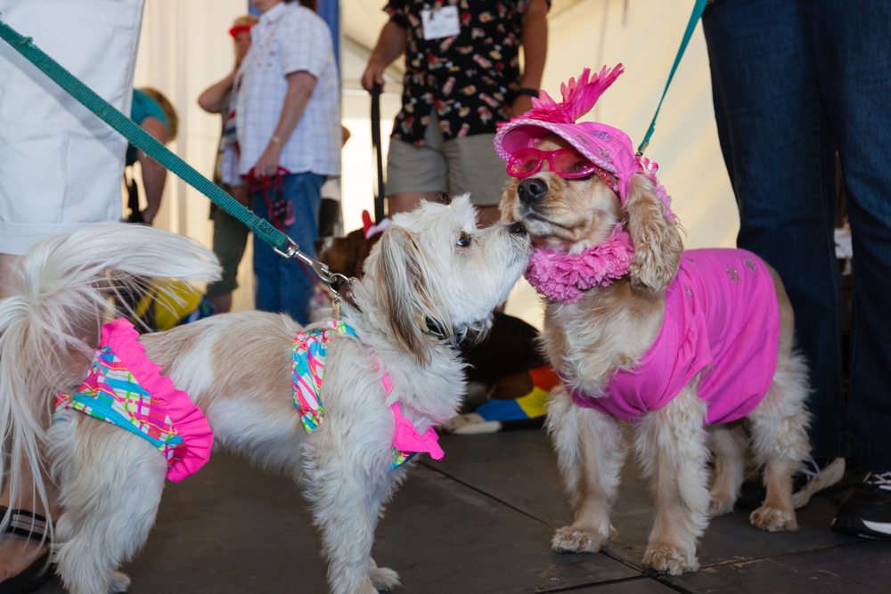 The canine swimsuit contest at Good Sam Club RV rally. Credit: Andy Isaacson