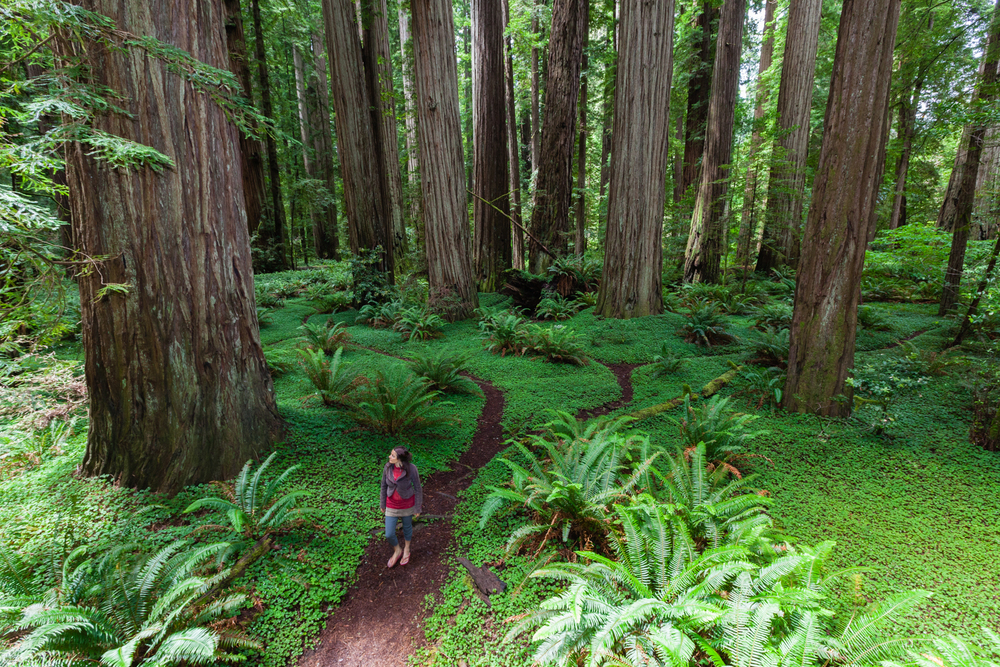 Jedediah Smith Redwoods State Park, California. Credit: Andy Isaacson