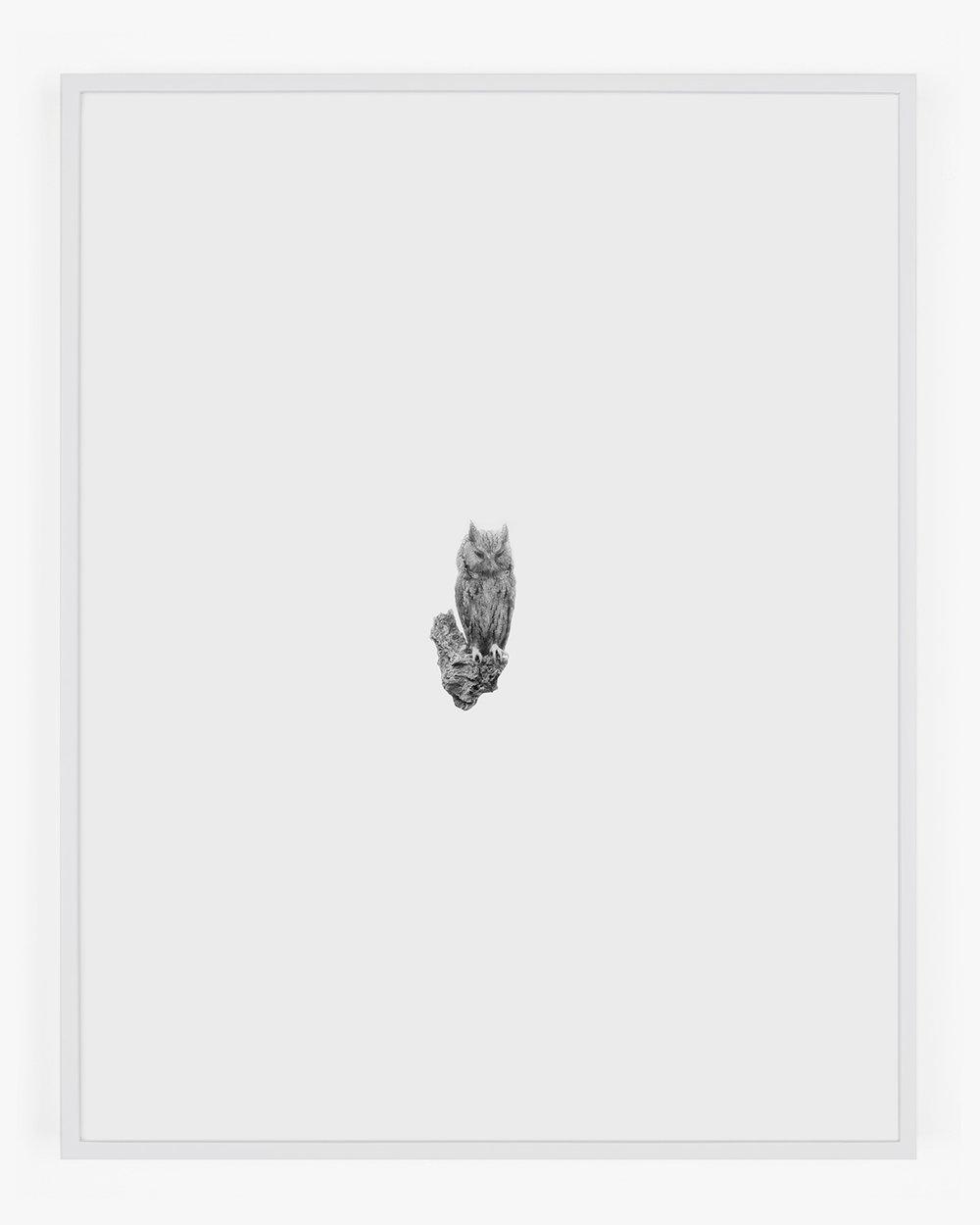 1858_Screech_Owl_Gray_Handal_Web.jpg