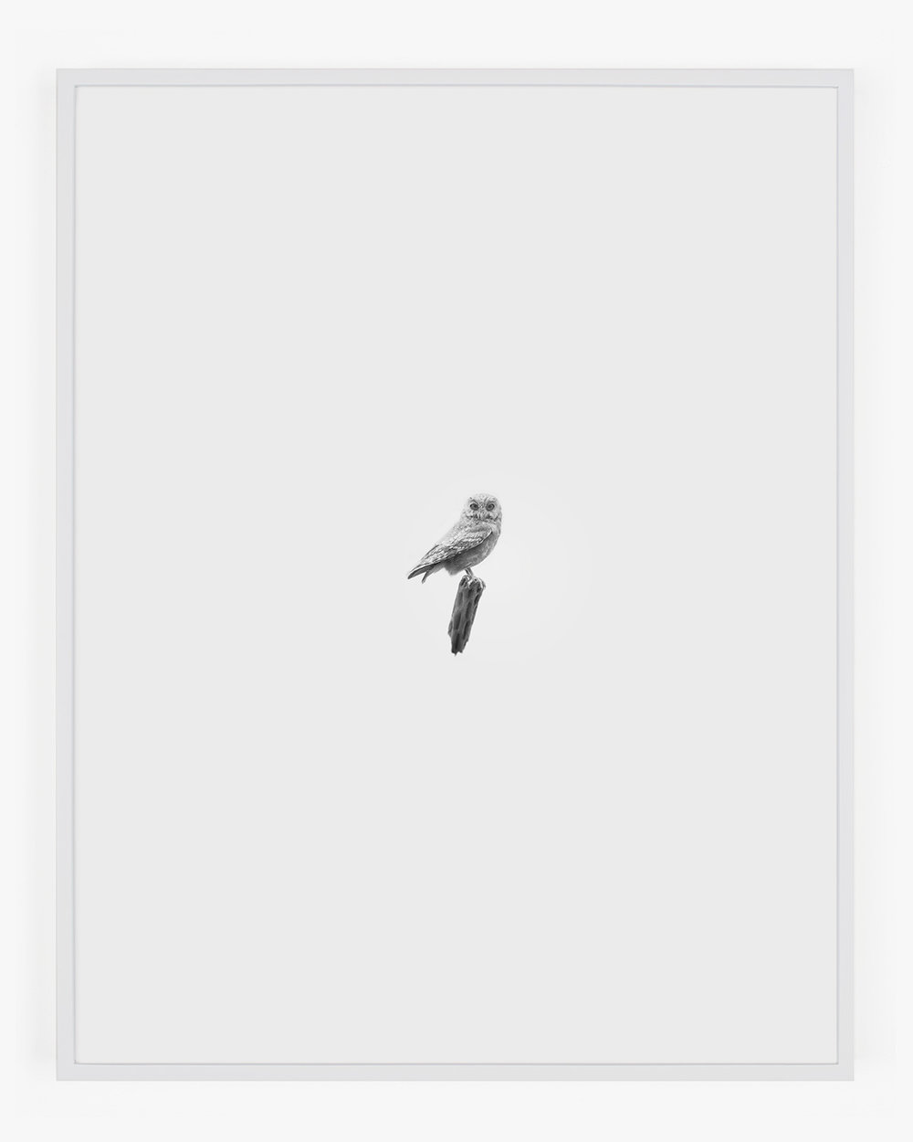 1862_Elf_Owl_Handal_Web.jpg