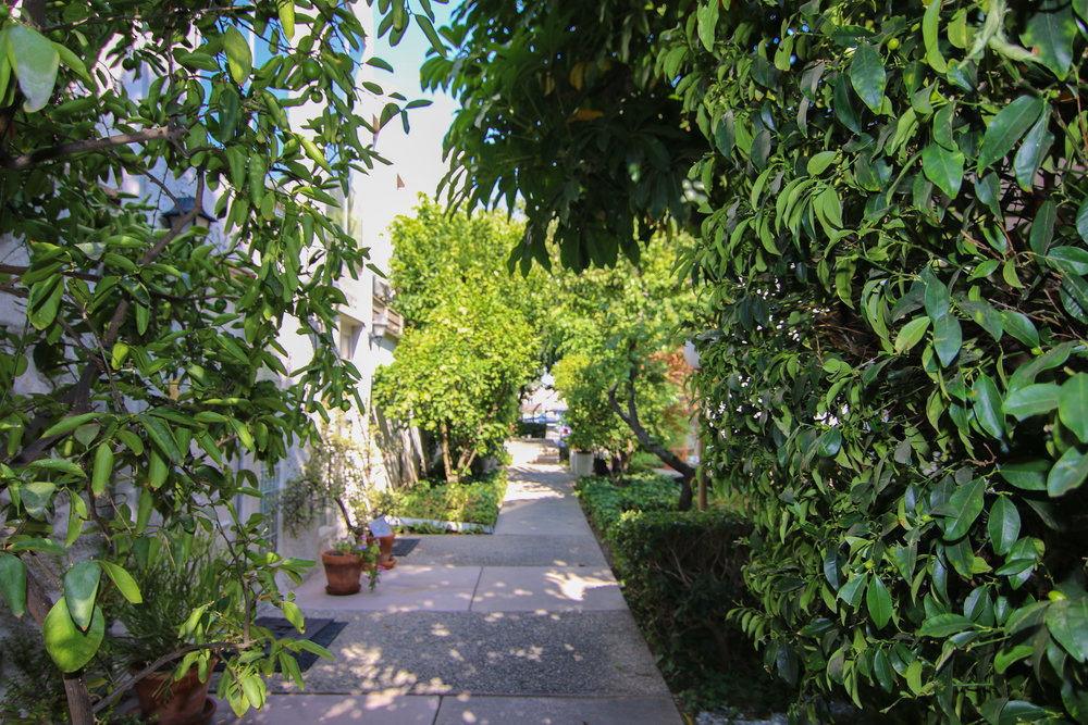 Walkway 2 (1 of 1).jpg