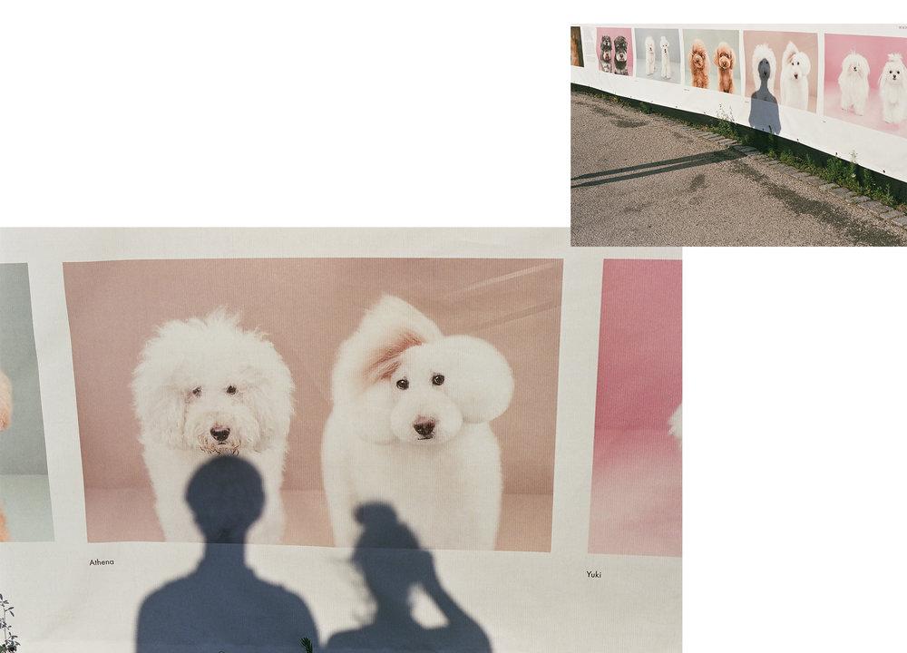 DUMBO-FILM-05.jpg