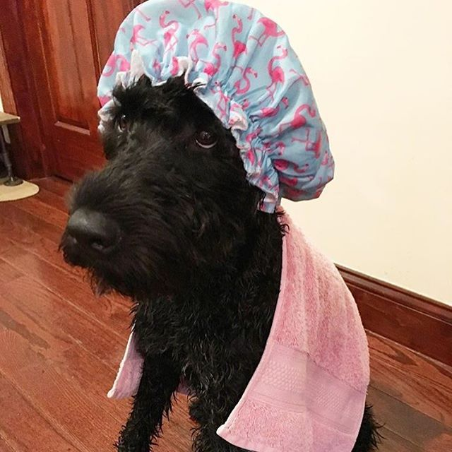 Looking 💯, @hudsontheportie!! 🐶🛀🏻