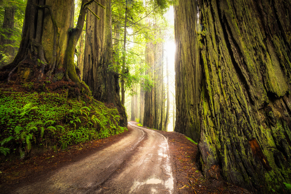 Road Beneath the Pillars of Eternity