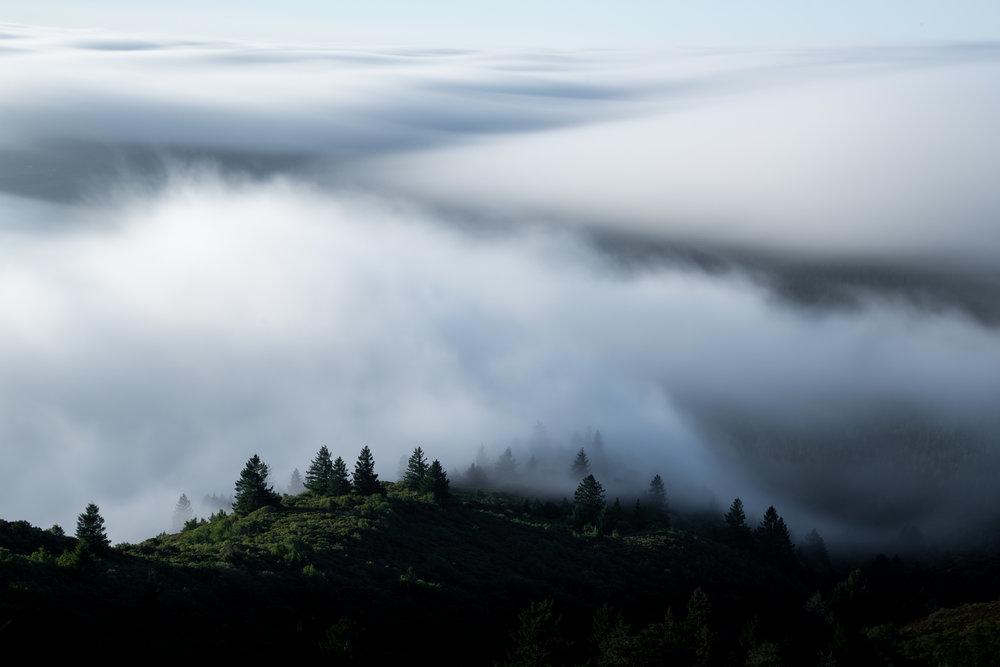 Mt Tam Fog _JJH1634.jpg
