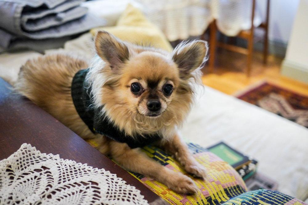 Heba's dog, Eno