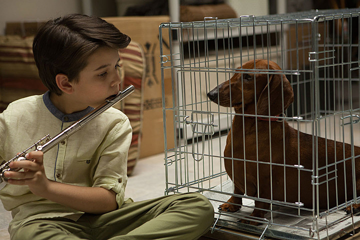 wiener dog best film of 2016 passerbuys