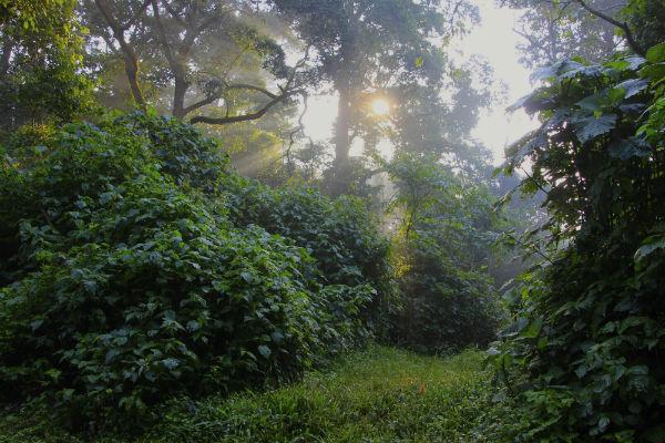 kibale-nature-foundation.jpg