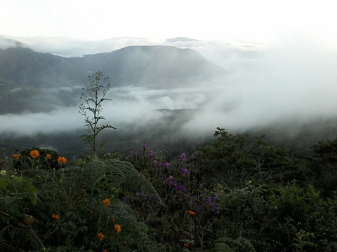 The Cloud Forest, Apasionado Coffee farm, pc: www.apasionadocoffee.com