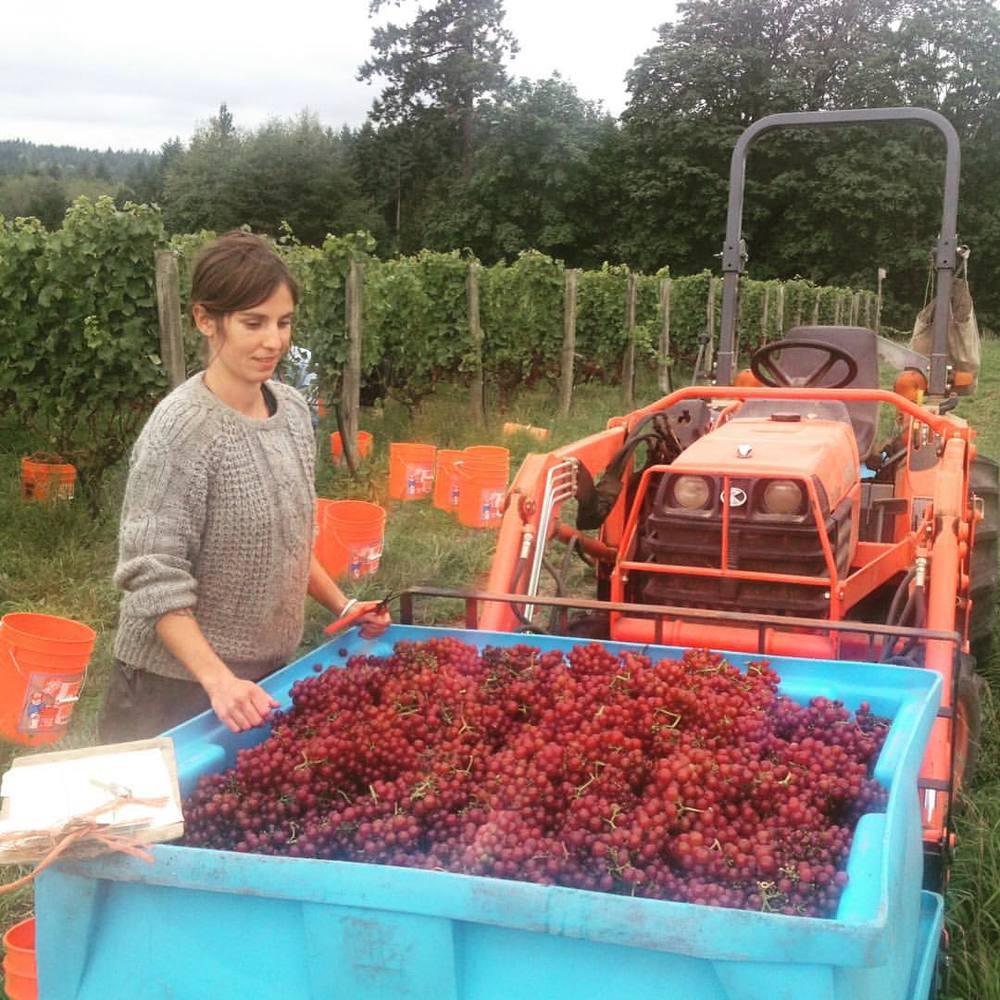 Harvest 2015 Sieg.jpg