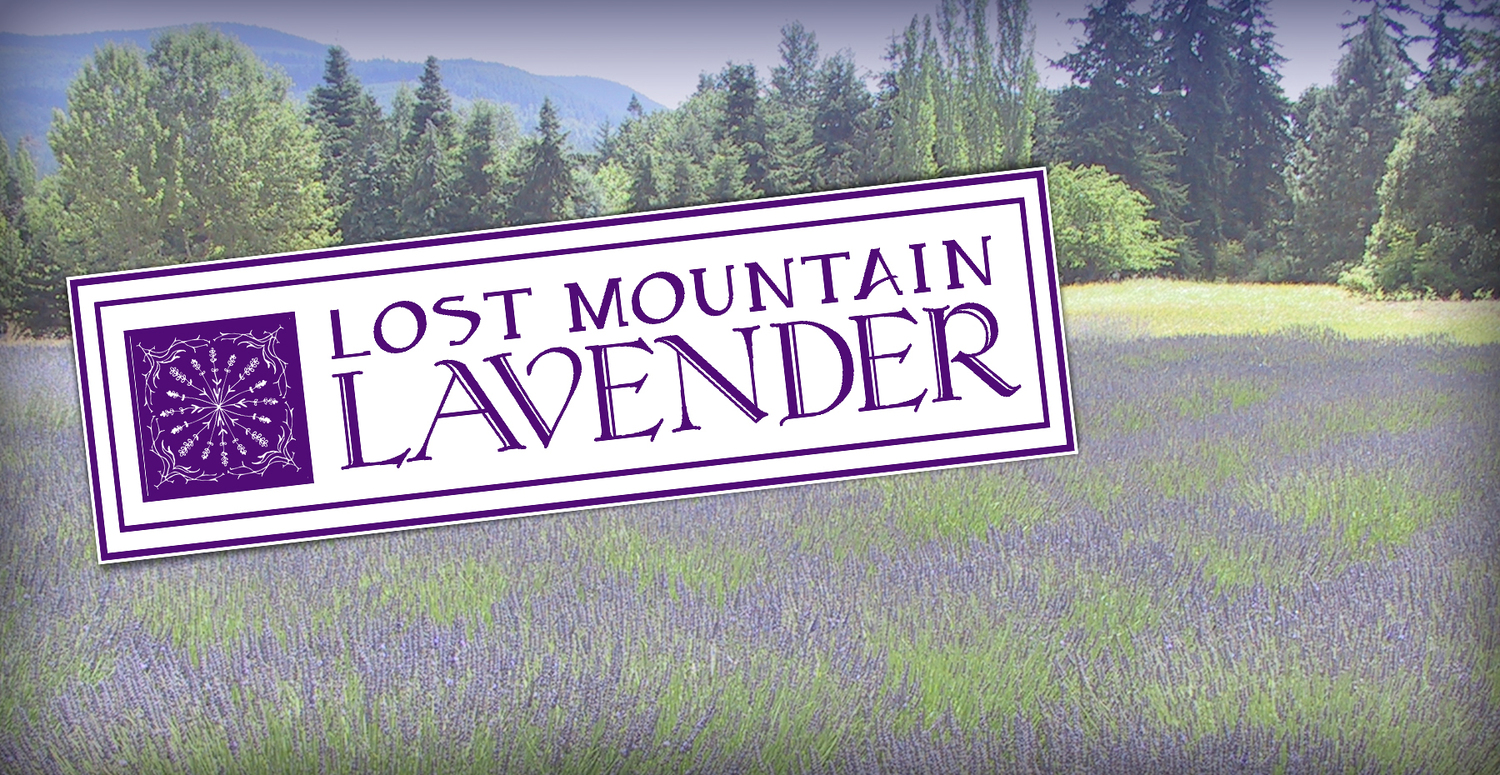 Lost Mountain Lavender