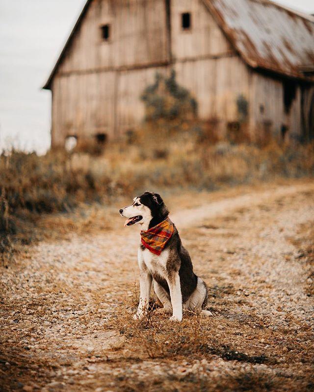 my farm dog 🐶 #farm #farmdog #barn #puremichigan