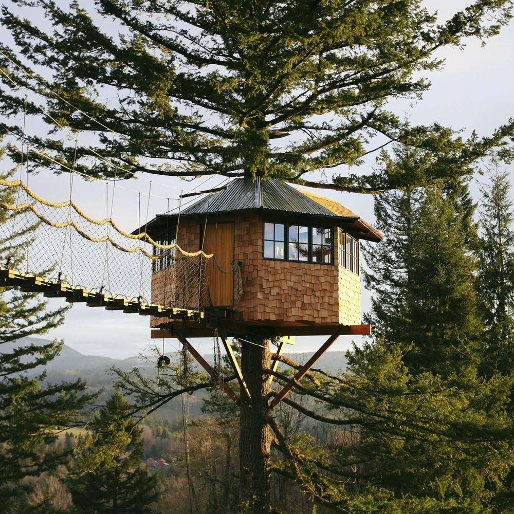 treehouse sunlit.jpg