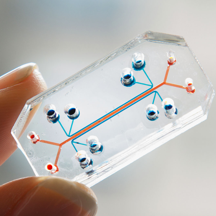 Lung on a Chip, Wyss Institute at Harvard U.
