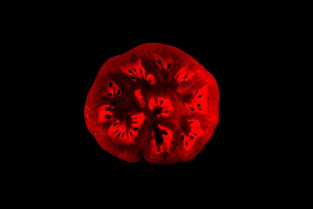 Myo-tomato003.jpg
