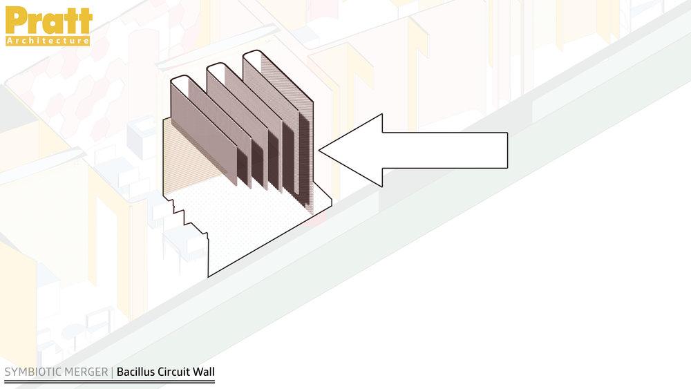 BacillusCircuitWall.jpg
