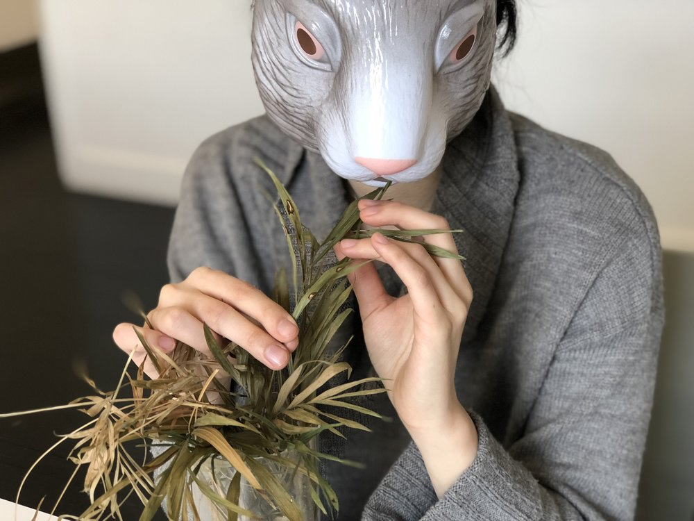 1.rabbit.jpg