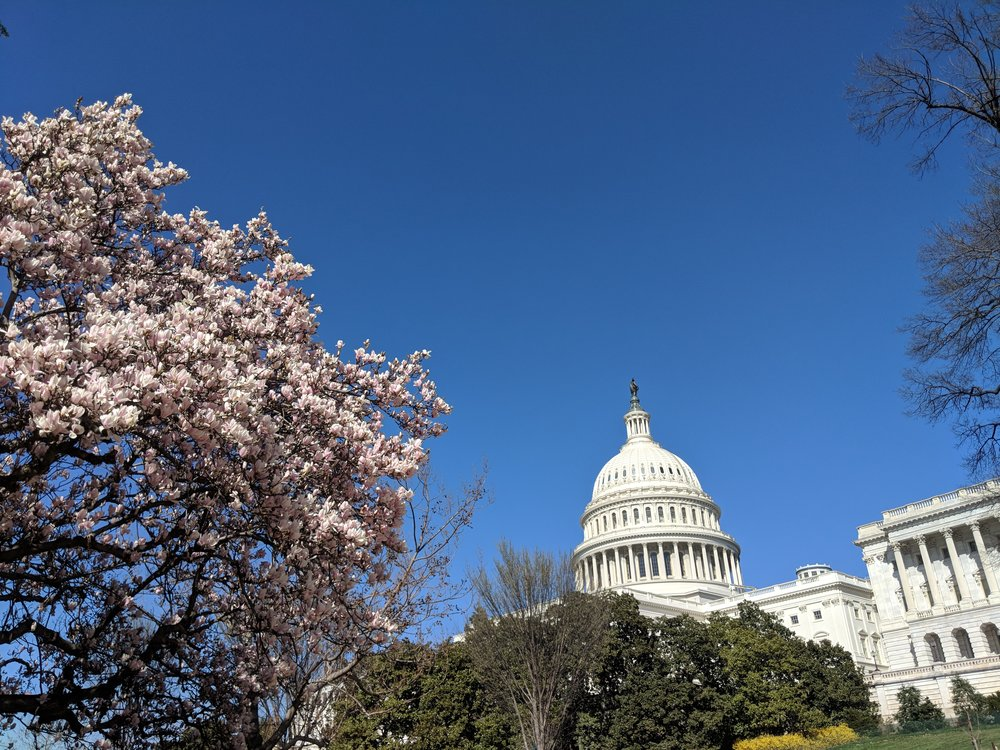 washington dc cherry blossoms 2018.jpg