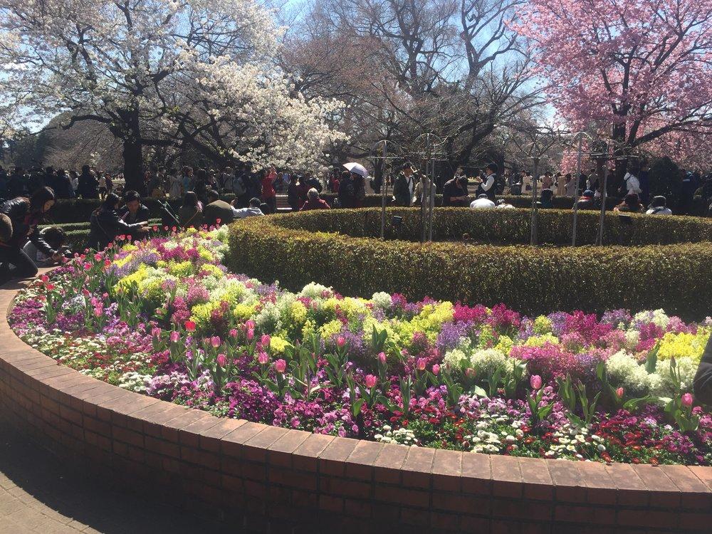 shinjuku gardens round garden.JPG