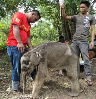 Emaciated Raju