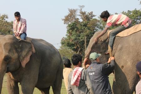 Dr. Kushal works on an elephant