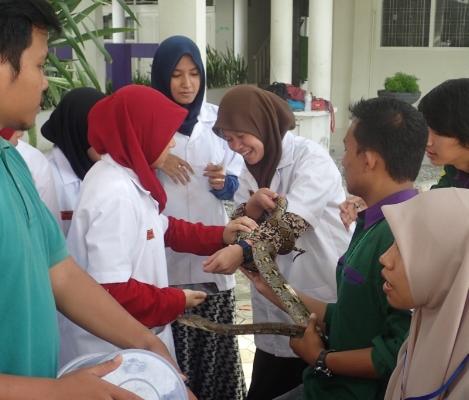 Safe reptile handling