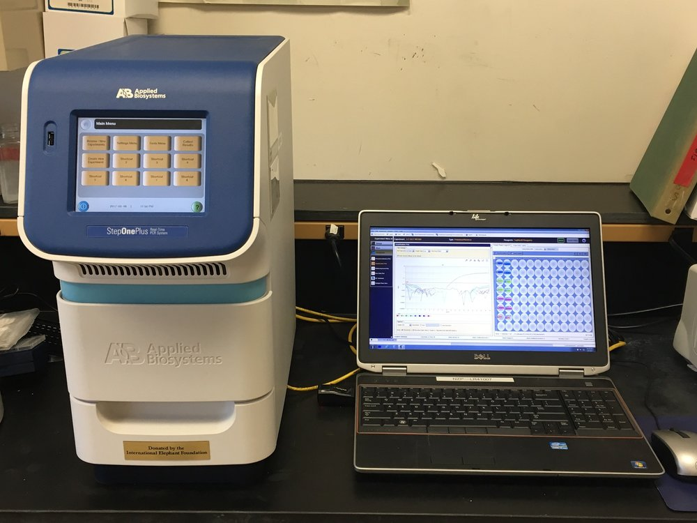 Polymerase chain reaction (qPCR) machine