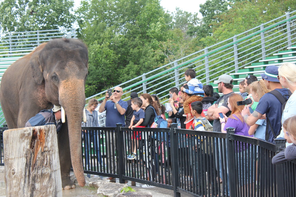 Elephants always pack the house at keeper chats