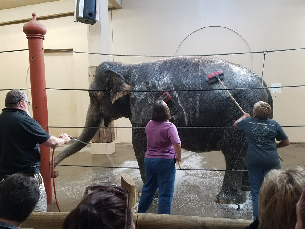 Janet Dray, left, and President Linda, right, giving Schottzie a scrub (also pictured on the far left, Cecil Jackson Jr., Cincinnati Zoo Elephant Manager)