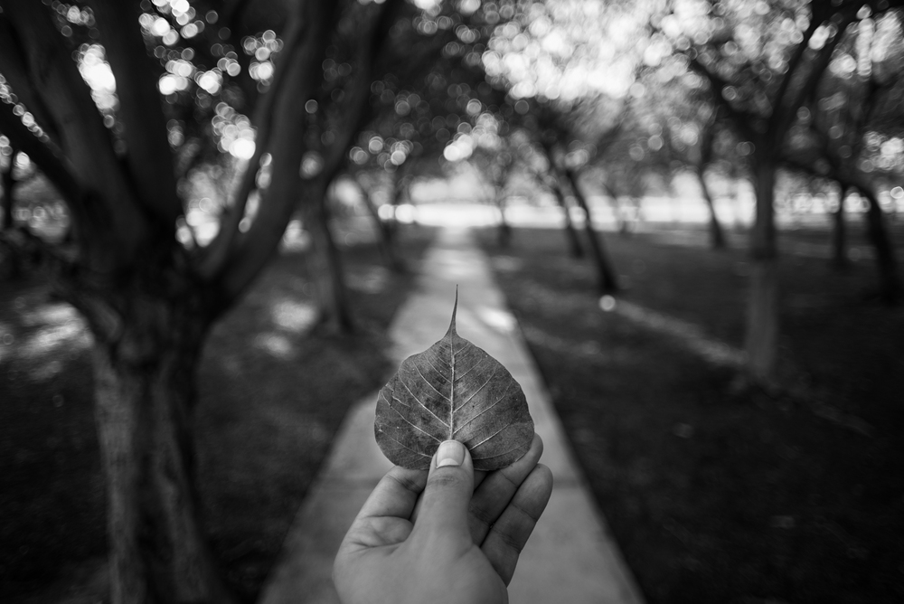 © Carlos Ocando, 2013.