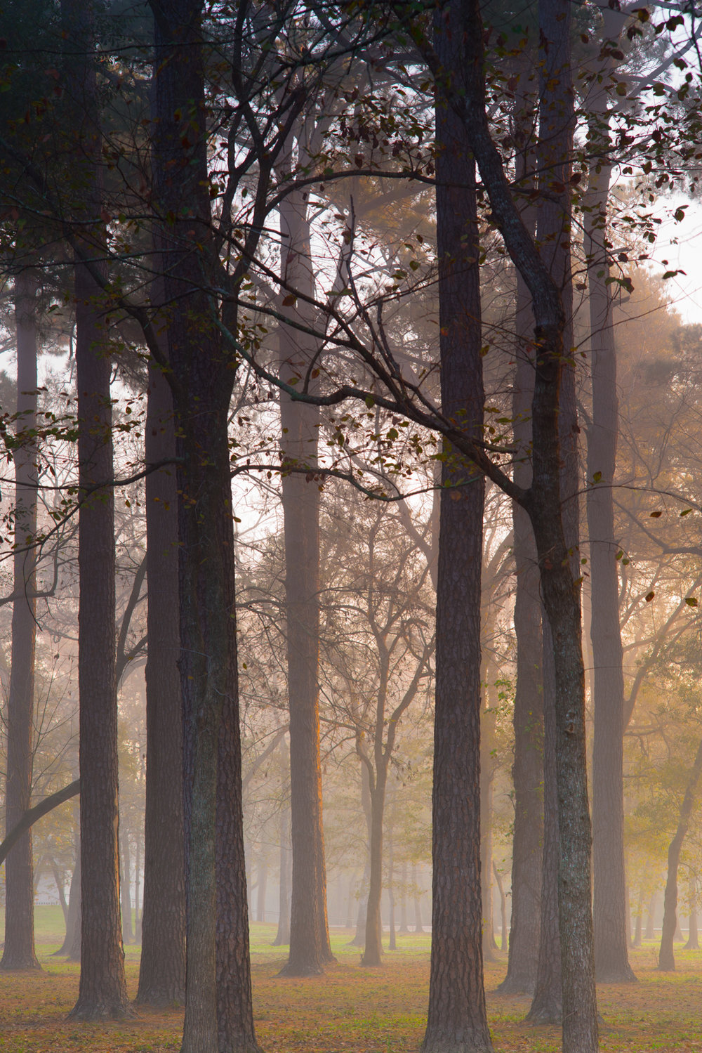 "Foggy Morning, part of the ""The Inspiring Beauty"" portfolio."