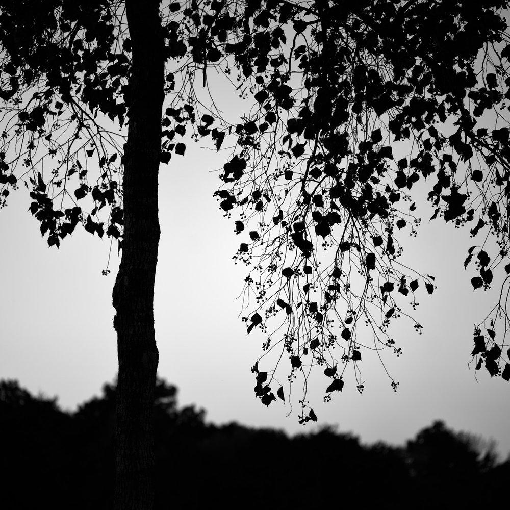 Lenswork-1.jpg