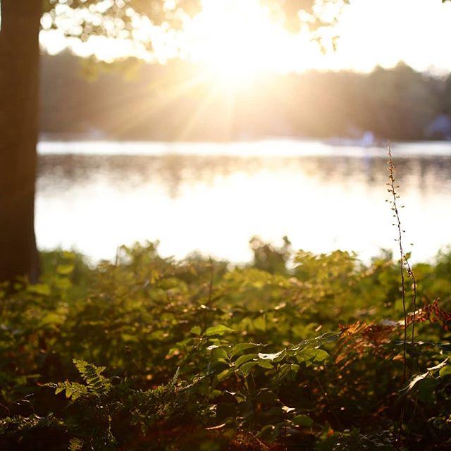 Stillness of summer . . . . . #newhampshire #lake #pond #randpond #goldenhour #summer18 #alishamartindalephoto #lakephotography