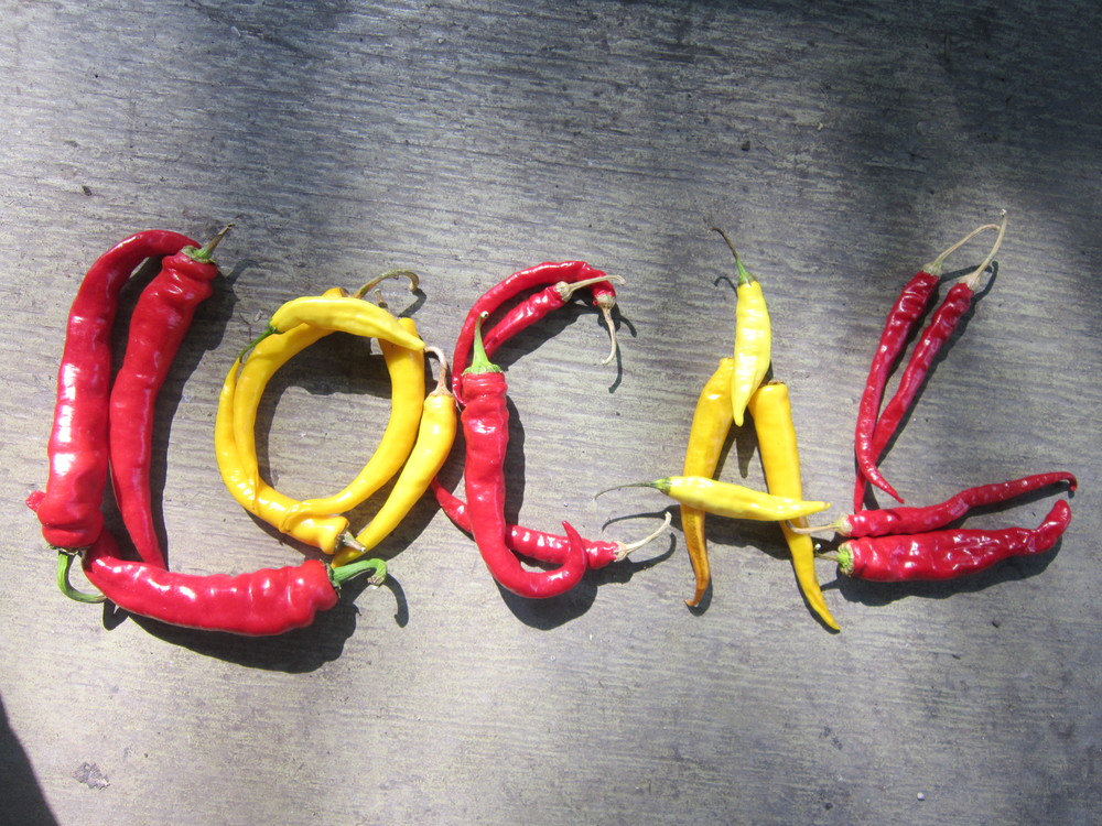 Permaculture Peppers (photo by Tiffany Grenkow)