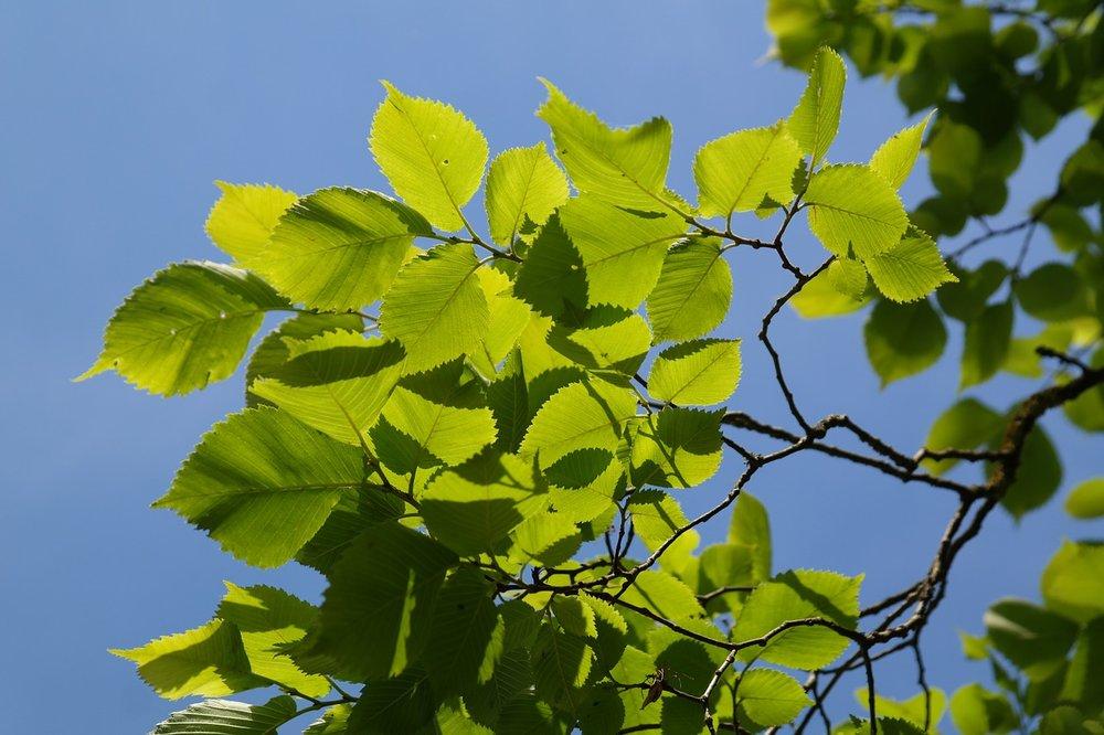 leaves-141612_1280.jpg