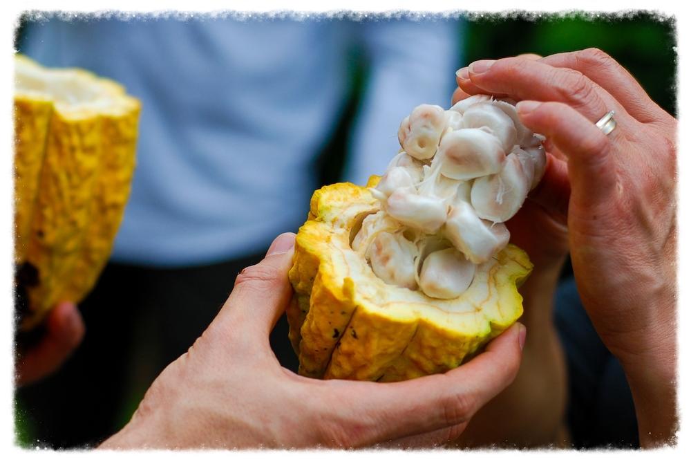 costa-rica-cocoa