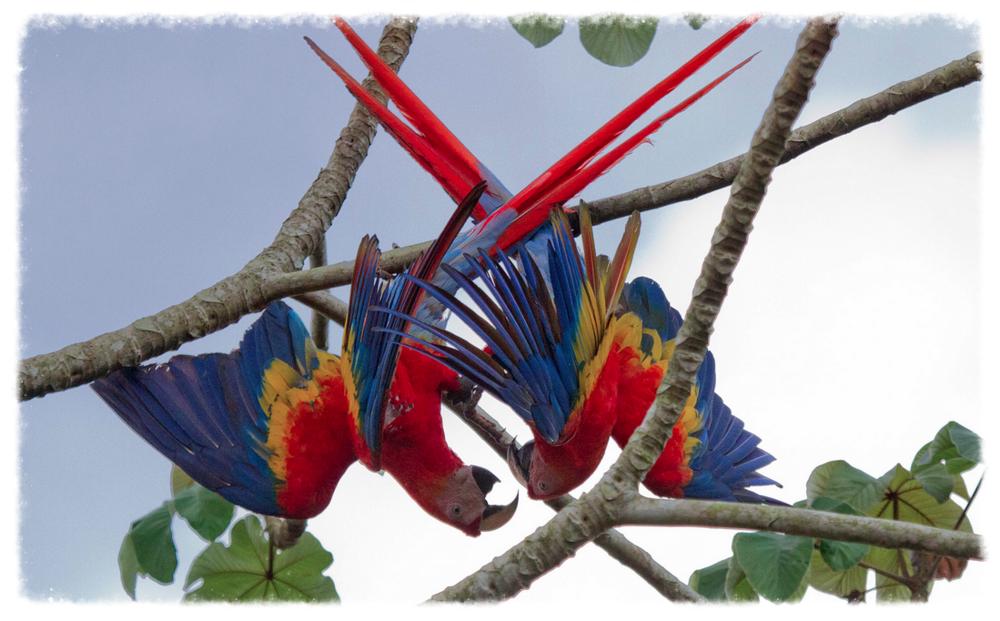 osa_parrots.jpg