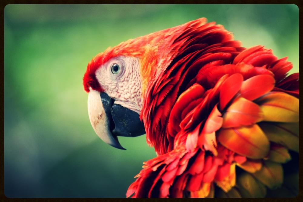 costa-rica-parrot.jpg