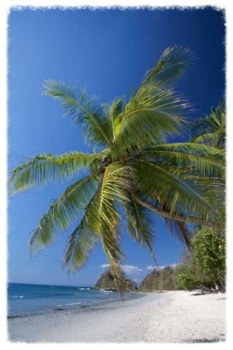 beach-palm.jpg