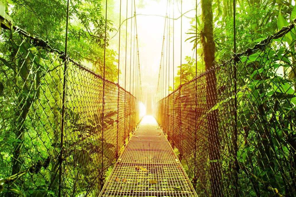 costa rica - hanging bridges arenal.jpg