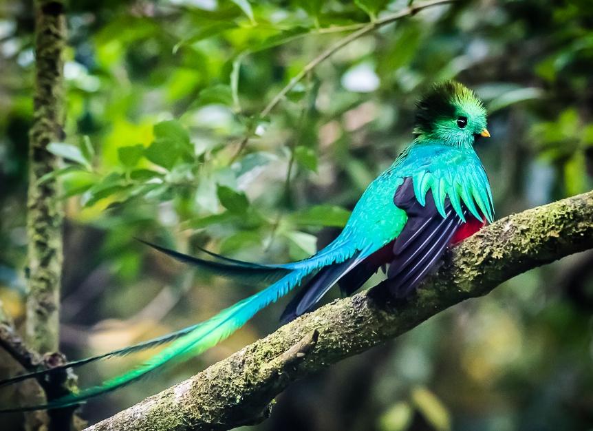 costarica-quetzal.jpg