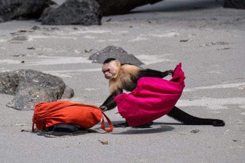 costarica-capuchin.jpg