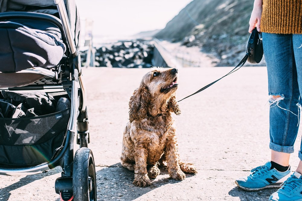 adorable-animal-canine-1499193.jpg