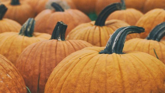 preview-full-Pumpkins.jpg