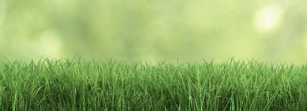 stock-photo-39577466-fresh-grass.jpg