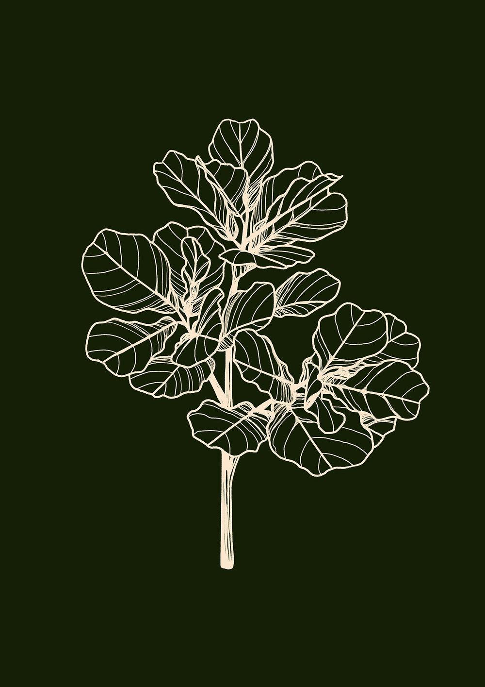 Fiddle Leaf.jpg
