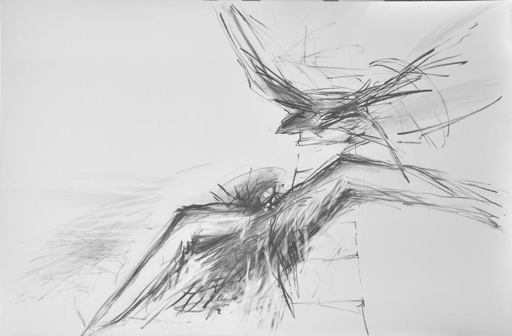 Blyant på paprir 55 x 73 cm