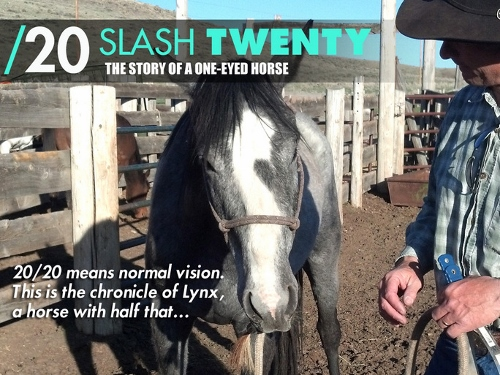 slash twenty one-eyed horse
